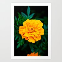 Tangerine Beauty Art Print