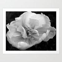 'Bloom' Art Print