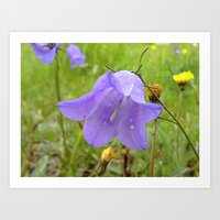 Bellflower Art Print