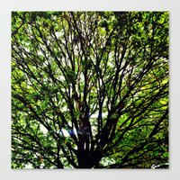 Leaves and Branches 3 Canvas Print