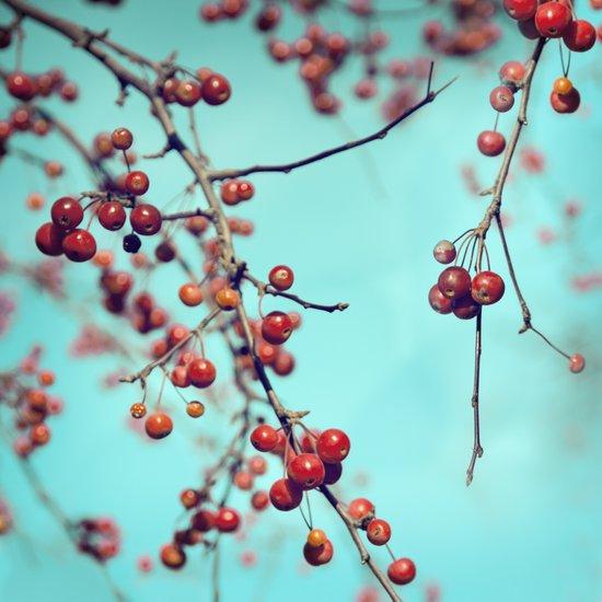 Hawberry Winter Tree Art Print