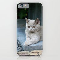 iPhone & iPod Case featuring Bikkel the cat ! by teddynash