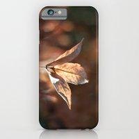 Late Autumn Light iPhone 6 Slim Case