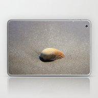 Seashell Laptop & iPad Skin
