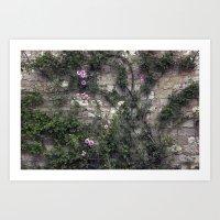 Wall Roses Art Print