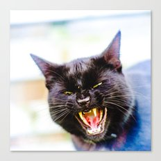 Angry black cat Canvas Print
