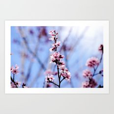 Signs of Spring 1 Art Print