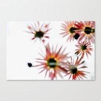 Happie 2 (Daisies) Canvas Print