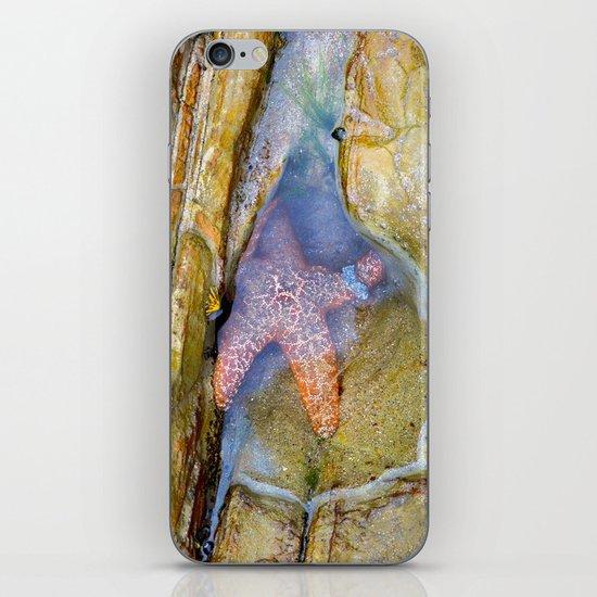 Tidepool Starfish iPhone & iPod Skin