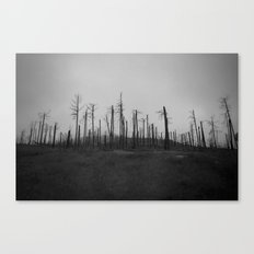 damage Canvas Print