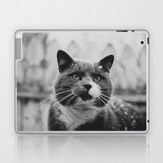 The Gray Cat Laptop & iPad Skin
