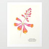 Botanical Sketches 1: Trumpet Honeysuckle Art Print