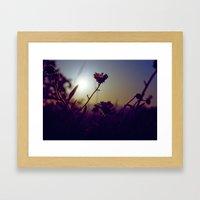 Daisy Daze Framed Art Print