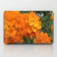 Flower,rose,daisy,lily,f… iPad Case