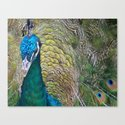 Peacock Up Close Canvas Print