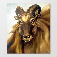 Tahr Portrait Canvas Print