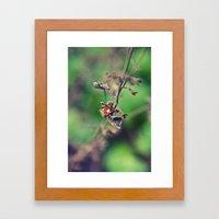 The Summer Bug Framed Art Print