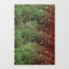 Canarian Jungle Canvas Print