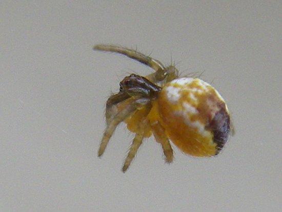 mini spider Art Print