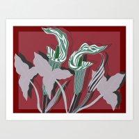 Arum Lilies IV. Art Print