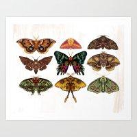 Moth Wings III Art Print