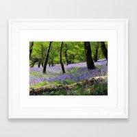 Bluebell Wood. Framed Art Print