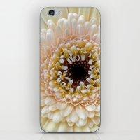 gerbera bloom IV iPhone & iPod Skin