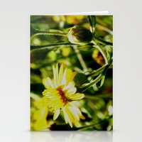 Sun Lit Flowers Stationery Cards