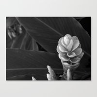 Canvas Print featuring Lily by SmallIslandInTheSun
