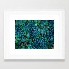 Turquoise succulent Framed Art Print
