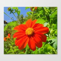 Tithonia With Bee, Flora… Canvas Print