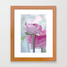 Tender Flower (ranunculu… Framed Art Print