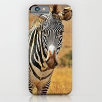 zebra iPhone & iPod Cases featuring Zebra by minx267