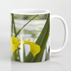 Flower. Yellow Iris (Iris pseudacorus) growing beside a lake. Mug