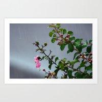 Rain Drops IV Art Print