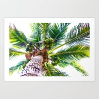 How About Those Coconuts Art Print