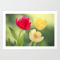 Red & Yellow Tulips Art Print