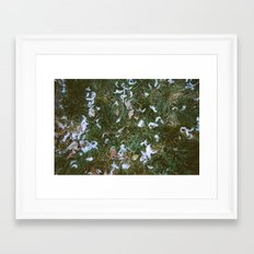 Doves Framed Art Print