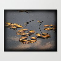 Golden Lily pads Canvas Print