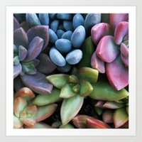 Colorful Succulents Art Print
