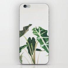 Elephant Ear iPhone & iPod Skin