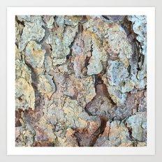 PINE TREE BARK Art Print