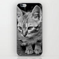 Kitty Cat iPhone & iPod Skin