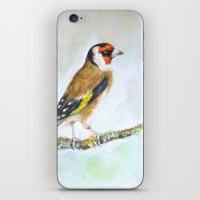 European goldfinch on tree branch iPhone & iPod Skin