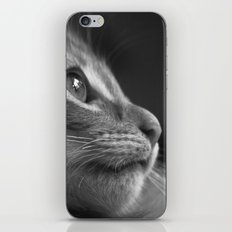 Cat iPhone & iPod Skin
