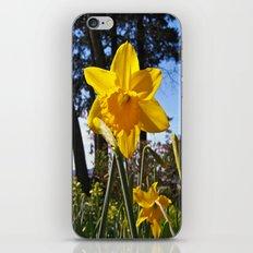 Daffodil rising iPhone & iPod Skin
