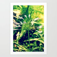 littleflowers Art Print