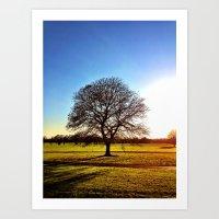 Tree - Malahide Park Art Print