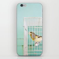 Finch Against Turquoise … iPhone & iPod Skin