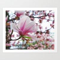 magnolia jubilee Art Print